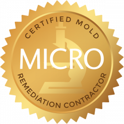 Certified Mold Remediation Contractor